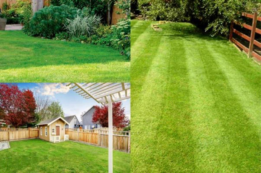 Lawn service mowing lawn professional