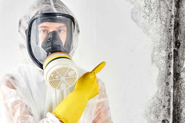 Mold-Remediation-Really