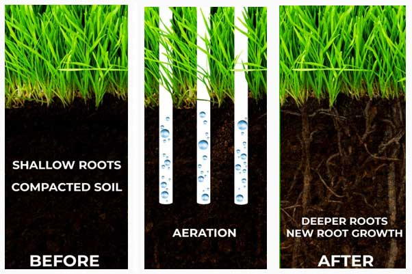 What does aeration actually do for your lawn?