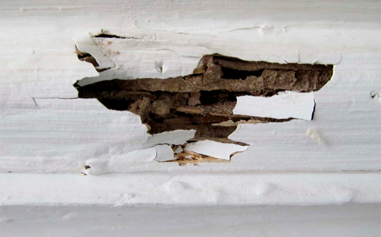 How to recognize signs of termite damage destroing syding