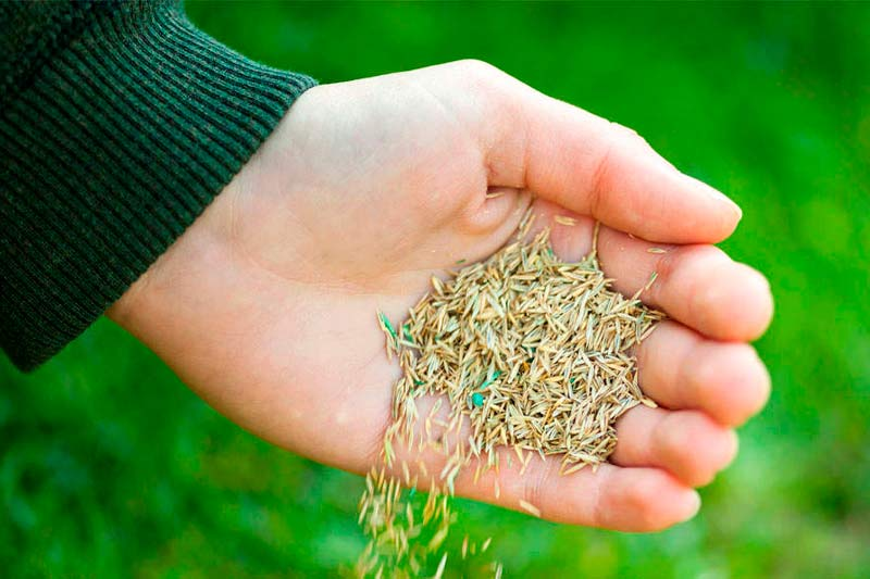 Does Grass Seed Get Too Old or Go Bad_How to Tell